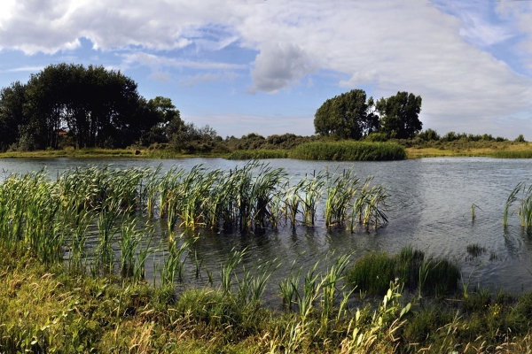 wetlandsiwva.jpg
