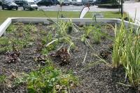 ecozplanten.jpg